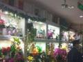 急转海淀花店转让商场花店水族鲜花饰品店转让A