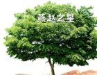 燕赵之星广告连锁火爆招商中