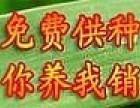 立农兴民蜈蚣养殖加盟
