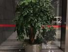 深圳南山绿植租摆、深圳租花、高端花卉租赁、办公室盆栽