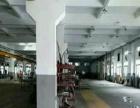 石特工业区标准1楼1900平方带牛角带行车可分租