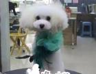 郑州宠懿宠物美容师培训学校