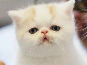 精品萌貓寶貝找新家啦,歡迎各位把它帶回家哦