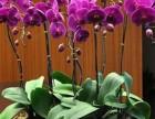 海珠区植物出租 海珠区植物销售 植物租赁 植物出摆