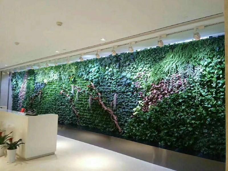 兰州植物墙 绿植墙 设计施工维护