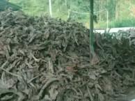 沉木批发 优质50公分以内精品沉木大量出售