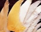 鱼翅回收 牙拣翅 大量回收鱼翅