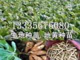 哪里有卖生地苗种植技术