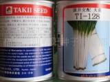 日本耐热大葱种子 泷井交配TI-128大葱种子 短叶高产高抗病