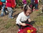 上海农家乐旅游 采桔子摘葡萄 垂钓烧烤 尽享秋日美好