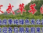 寒武草莓园采摘园
