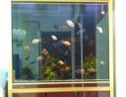 出售自家用的下过滤鱼缸,长1米,刚买4个月,赠送少量的鱼