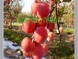 苹果水果  陕西大荔县苹果价格 沂蒙红富士苹果 箱装生鲜水果