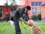 上海狗狗训练费用-训犬基地的价格-派多格寄训中心