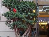 沈阳绿植花卉租赁 大连盆栽租摆,出租,绿植墙植物墙工程 养护