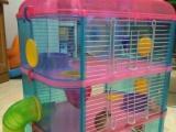 售仓鼠及宠物用品