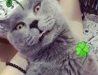 一岁蓝猫DD求女朋友,希望是个漂亮的姑娘