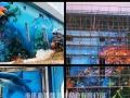 幼儿园墙画墙绘工程壁画文化墙绘画外墙涂鸦空间彩绘