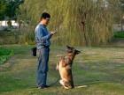 常州专业宠物训练训狗训犬