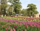 东莞梦幻百花洲花海里的农家乐松湖生态园一日游