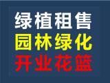 深圳各区花卉租赁销售服务 园林绿化办公室绿植租赁