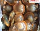 全国批发海鲜产品鱿鱼、墨鱼仔、青虾仁、扇贝、田鸡、各种鱼类
