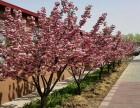 北京香堂国际体育运动城 拓展研学场地