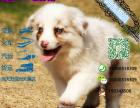 宠物店和狗市里的边境牧羊犬可以买吗 健康的多少钱一只