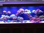 出售观赏鱼清洗鱼缸海水鱼租摆维护鱼缸搬家
