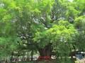 桂林 欢乐童游四日游