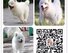 银川世界名犬直销纯种优质保健康