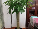 崇文办公室植物租赁花卉租赁
