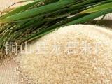 供应粳米 铜山县龙君米厂供应批发 选白米