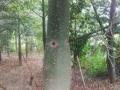 低价急出一批风景树,日本木棉、海枣、老人葵、发财树