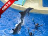 提前预定香港两天海洋公园 迪士尼双园游只需768元