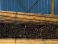 钢板桩,排山管,扣件,工字钢,脚踏网,型材等等