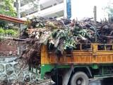 广州市越秀区绿化垃圾清运