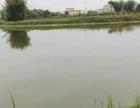 董塘 鱼塘,养猪场出租