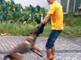 萌宠校园---全佛山最专业的宠物训练养护专业机构