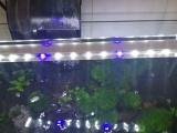 转让居家风水生态鱼缸