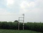 本人有二十亩优质3号竹柳苗三米以上急需特价转让外地