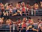 北京拳击散打泰拳综合格斗截拳道培训