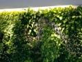 上海专业垂直绿化墙设计施工