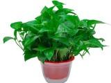 北京綠植花卉養護 綠化保養管理