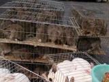 大型兔子养殖招加盟 加盟/加盟费用/项目详情