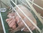养猪场转让 乌盟卓资县大榆树 土地 5000平米