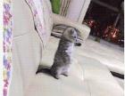 我的可爱猫猫,求好心人照顾它吧