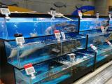 岳阳海鲜鱼池定做厂家好用的超市饭店水产鱼缸定制价格合理