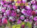 玫瑰花茶 2014年新货 新疆和田玫瑰 干花蕾 沙漠玫瑰无污染
