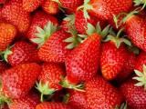 珠海草莓苗厂商 放心选择